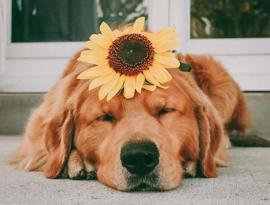 Jaxson The Golden Shares His Cutest Poses On Instagram